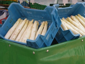 Large white asparagus in the market
